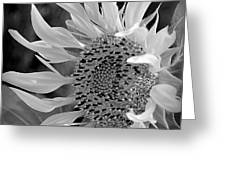 Sunflower In Contrast Greeting Card