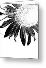 Sunflower In Corner Bw Threshold Greeting Card