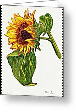 Sunflower In Gouache Greeting Card