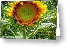 Sunflower In Mocksville Greeting Card by Ben Shields