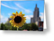 Sunflower In Providence Greeting Card