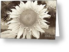 Sunflower In Soft Sepia Greeting Card