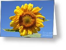 Sunflower In Sunshine  Greeting Card