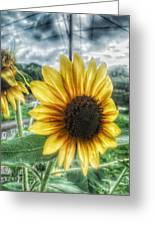Sunflower In Town Greeting Card