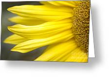 Sunflower Greeting Card by Mary Van de Ven - Printscapes
