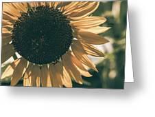 Sunflower Matte Greeting Card