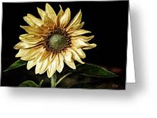 Sunflower Modified Greeting Card