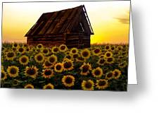 Sunflower Morning With Barn Greeting Card