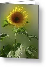 sunflower No. 10 Greeting Card