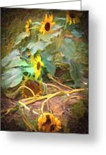 sunflower No. 9 Greeting Card
