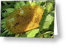 sunflower No.2 Greeting Card