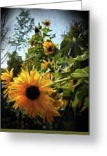 sunflower No.8 Greeting Card