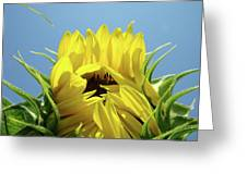 Sunflower Opening Sunny Summer Day 1 Giclee Art Prints Baslee Troutman Greeting Card