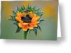 Sunflower Opens Greeting Card