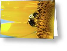 Sunflower Pollen Greeting Card