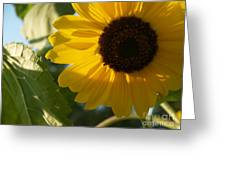 Sunflower Portrait With Leaf Greeting Card