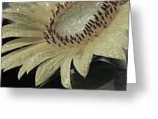 Sunflower Rain Greeting Card