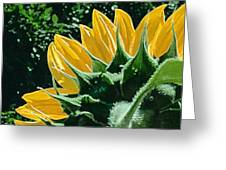 Sunflower Rear Greeting Card