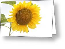 Sunflower Salutation  Greeting Card