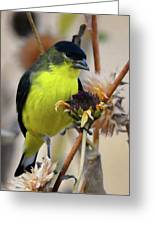 Sunflower Seed Snack Greeting Card