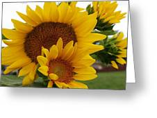 Sunflower Show Greeting Card