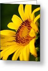 Sunflower Side Light Greeting Card