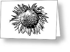 Sunflower Silhouette Greeting Card