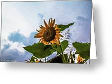 Sunflower Sky Greeting Card