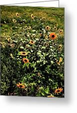 Sunflower Stalks Greeting Card