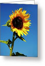 Sunflower Stand Alone Greeting Card