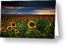 Sunflower Storms Greeting Card