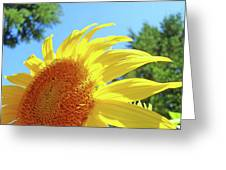 Sunflower Sunlit Art Print Canvas Sun Flowers Baslee Troutman Greeting Card