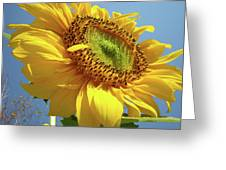 Sunflower Sunlit Sun Flowers 6 Blue Sky Giclee Art Prints Baslee Troutman Greeting Card