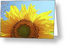 Sunflower Sunlit Sun Flowers Giclee Art Prints Baslee Troutman Greeting Card