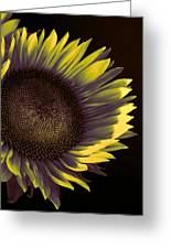 Sunflower Dawn Greeting Card