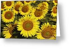 Sunflower Sunshine Greeting Card