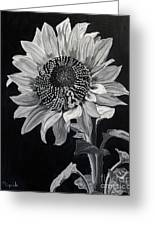 Sunflower Sutra Greeting Card