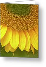 Sunflower Up Close Greeting Card
