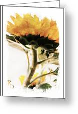 Sunflower Watercolor Greeting Card