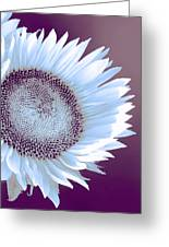 Sunflower Starlight Greeting Card