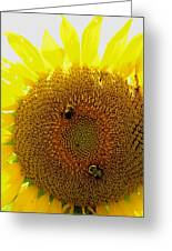 Sunflower With Bees Greeting Card