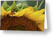 Sunflower With Grasshopper Greeting Card