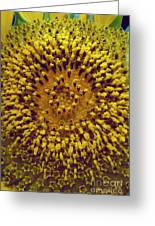 Sunflower1 Greeting Card