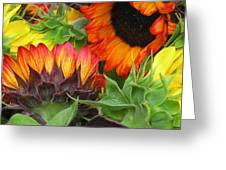 Sunflower2 Greeting Card