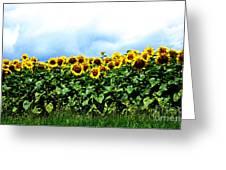 Sunflowers 2 Greeting Card