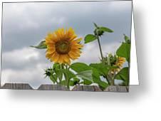 Sunflowers 2018-1 Greeting Card