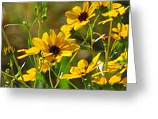 Sunflowers Along The Trail Greeting Card
