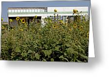 Sunflowers And Abandoned Gas Station Greeting Card