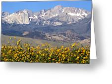 2a6742-sunflowers And Mount Humphreys  Greeting Card