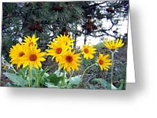 Sunflowers And Pine Cones Greeting Card by Will Borden
